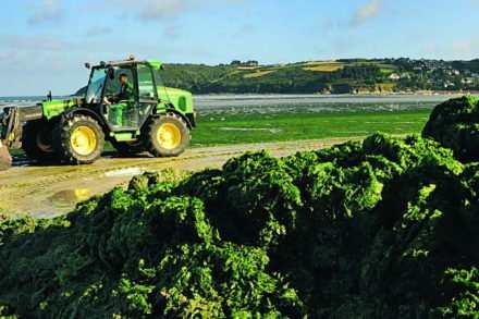 Prolifération des algues vertes